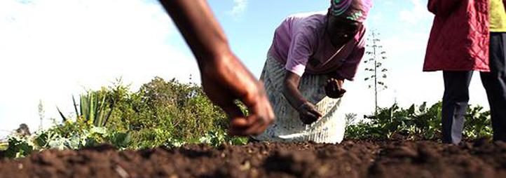 Femme d'un pays en voir de développement qui sème des graines dans un champs
