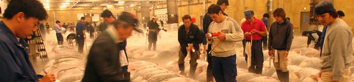 Marché de poissons au Japon
