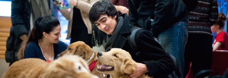 students enjoying the company of therapy dogs