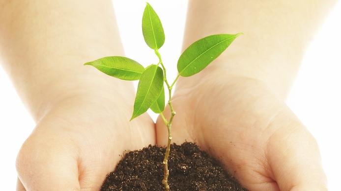 petite plante poussant dans la terre tenue par 2 mains